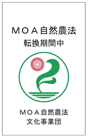 MOA自然農法転換期間中
